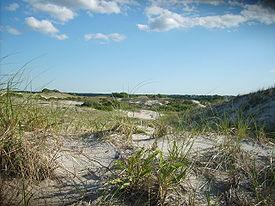 image of Cape Cod Sandy Neck Dunes