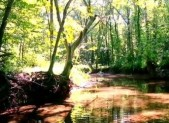 Ten Mile Creek image from Clarksburg, MD