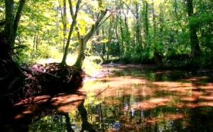 ten mile creek slider 450X280
