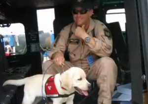 Photo of service dog and military