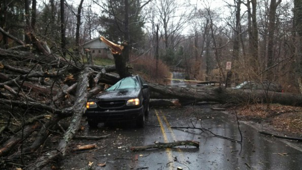 Tree on a car , New Castle Dr. Silver Spring.