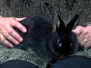 photo of Bosley the rabbit