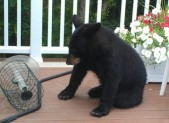 bear featured image