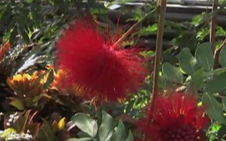 CRTW 198 plant