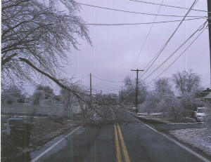 downed trees Feb 5