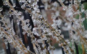 freezing rain and sleet on plant for slider 450 x 280