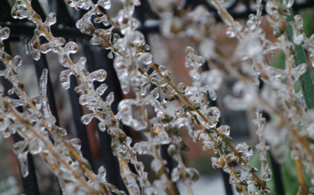 freezing rain andd sleet on plant for slider 450 x 280