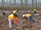 photo volunteers cleaning up azalea garden