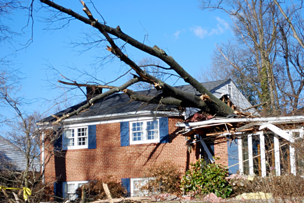 photo of house with tree damage