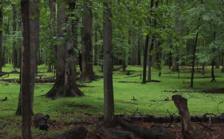 photo of Trees by Christine Darton