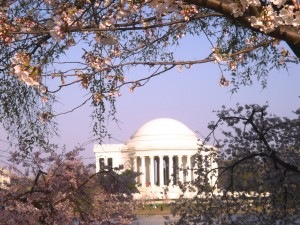 The Jefferson Monument at Cherry Blossom time (c) Diana Belchase