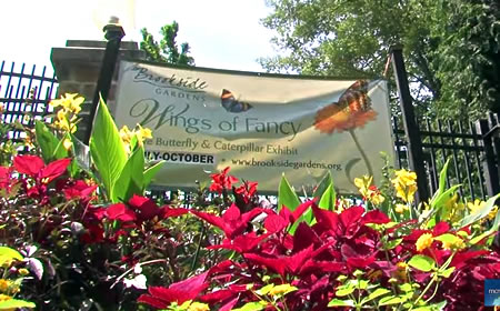 Brookside Gardens Butterfly Exhibit Closing Early Thursday ...