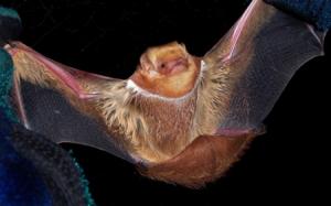 bat for slider 450 x 280.fw