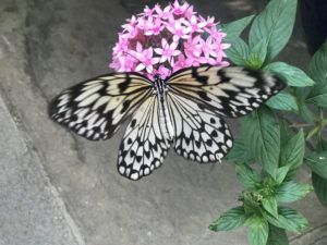 The Wings of Fancy Live Butterfly and Caterpillar Exhibit