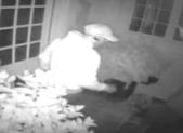 Burglary_Potomac
